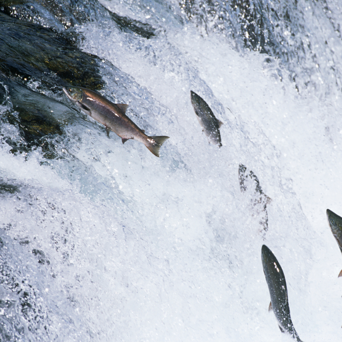 blog post about salmon